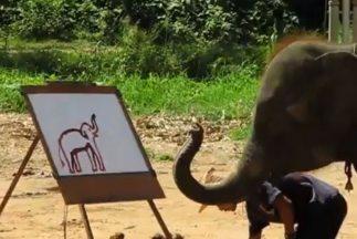Suda un elefanta con talento para pintar