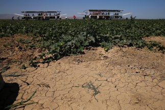 Los cultivadores cuidan el agua como un tesoro, porque es posible que en...