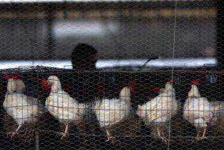 Las autoridades del sector sanitario animal del país sudamericano expres...