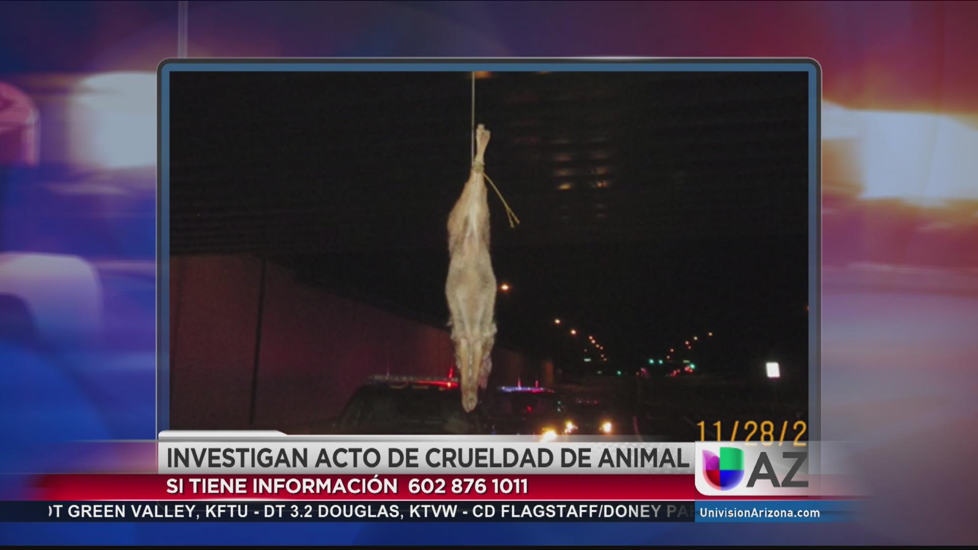 Investigan acto de crueldad animal