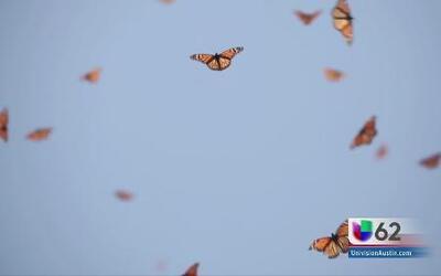 Un grupo de 22 niños realizó una investigación de la mariposa monarca