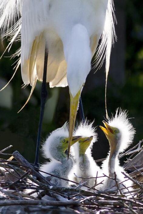 ¡Se convierten en padres estas aves! Los polluelos finalmente salieron a...