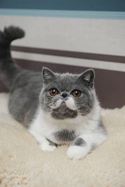 Este gatito no sólo es especial por sus peculiares bigotes, si no...