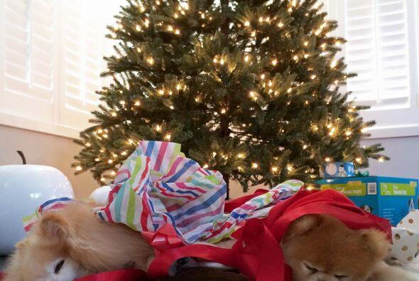 En la navidad ellos no perdieron el estilo.