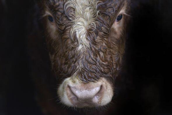 El 'plus': podrán conocer distintos museos sobre la vida en la granja.