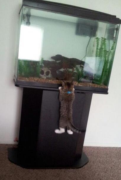 ¡Alguien vio un lindo pecesito! Y juramos que si no estuviera el agua de...