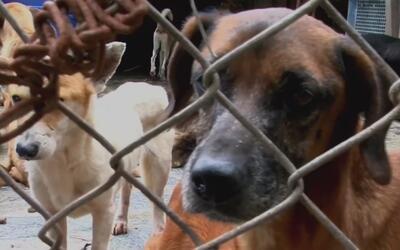 Los animales no escapan de la crisis en Venezuela