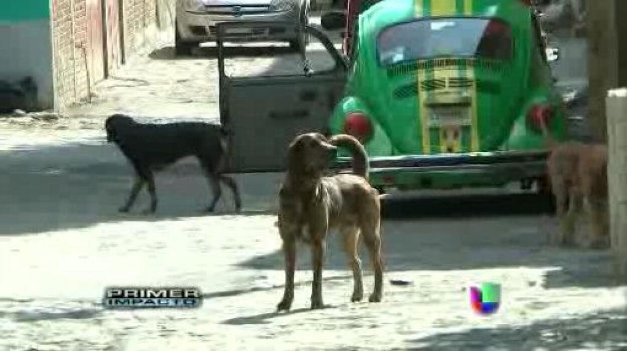 'PERROS SICARIOS'.  Autoridades de Ciudad de México comenzaron a liberar...