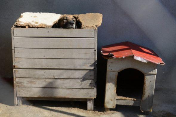 En la mayoría de los casos, los perros adultos han sido educados para vi...