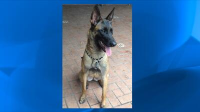 Stella, una perra perdida tras accidente de auto