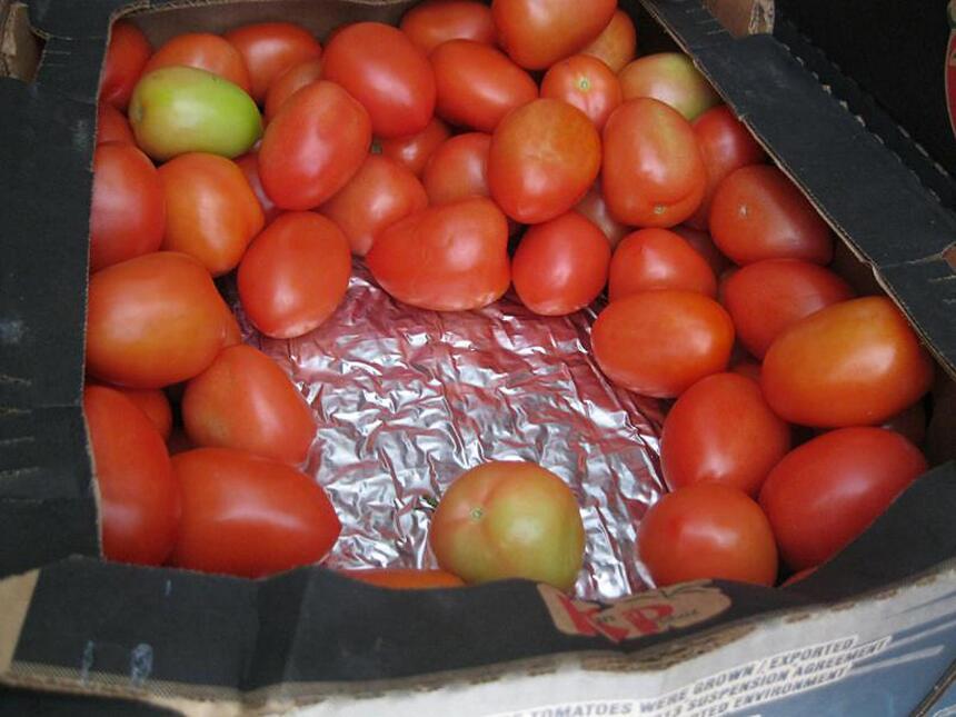 Debajo de los tomates estaba la marihuana.