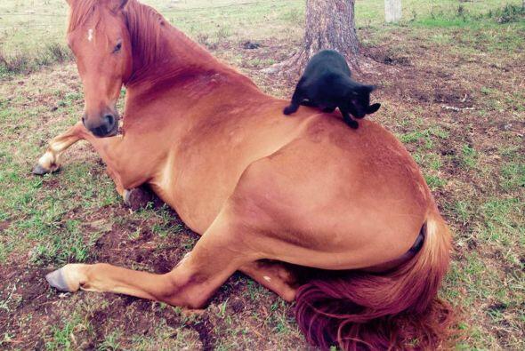 Así como para el amor no hay edad, para la amistad no hay tamaños, ni se...