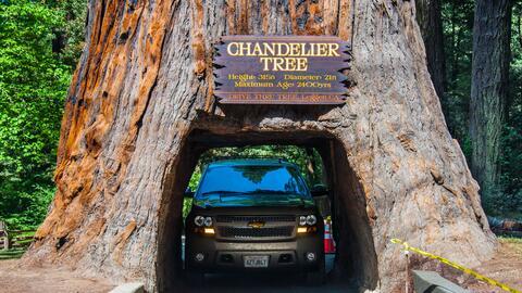 Árboles túneles de California