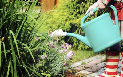¡Sé verde y cuida las plantas de tu casa!
