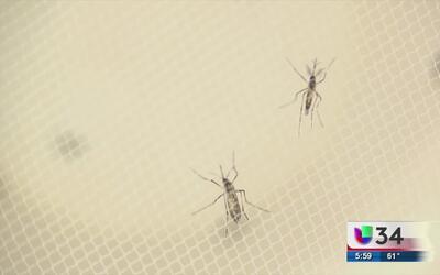 Confirman primer caso de Zika en Georgia