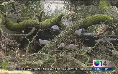 Árbol cae sobre una vivienda en Danville
