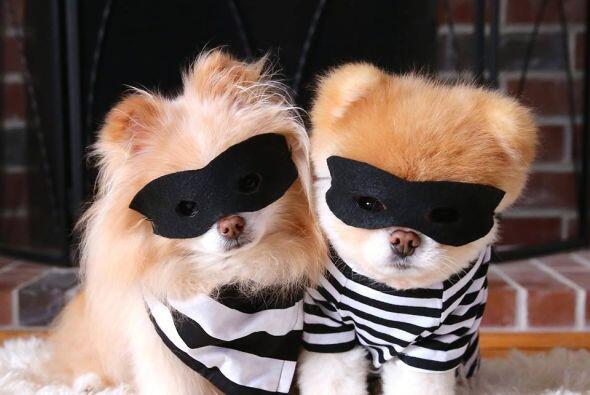 Entre sus gustos aman los disfraces y las gafas de sol.