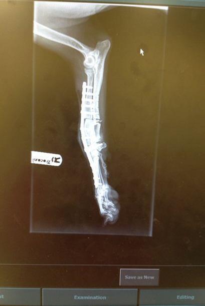 Éste es el resultado de la operación, ahora la pata derecha de Sandy ya...
