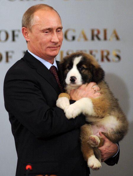 El perro de raza karakachán fue regalado al primer ministro ruso en Bulg...