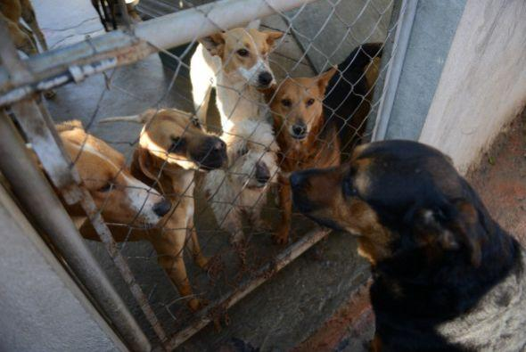 Otra ventaja es que ayudarás a la sobrepoblación canina, este es un prob...