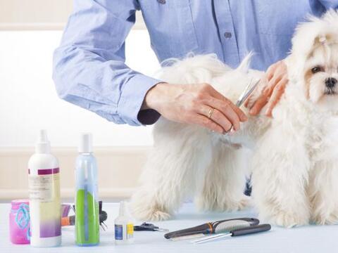 No todo el cuidado de tu perro depende del veterinario, de hecho muchas...