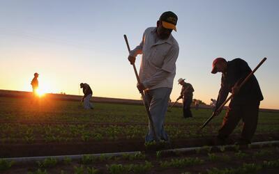 La jornada laboral de los campesinos en California se reduciría a...
