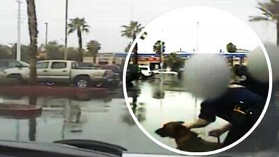 Perro policía muerde por descuido de agentes a bebé hispana en Las Vegas
