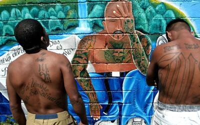 Incrementan castigos para luchar contra las pandillas en Houston
