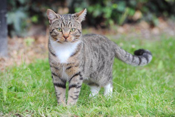 Smudge un bello felino, al ver a su dueño en peligro dio un brinco hacia...