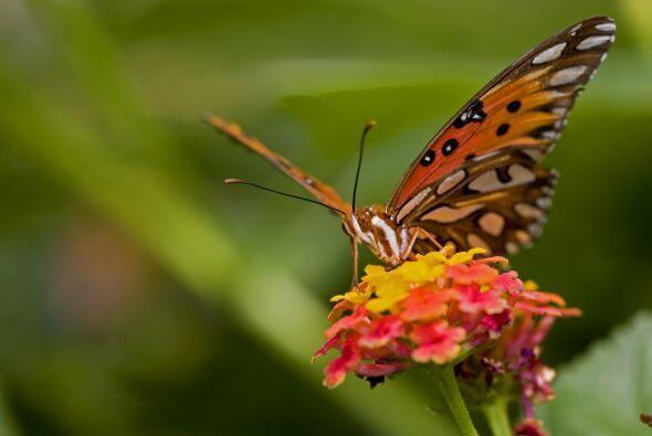 Todos son bienvenidos. ¿Quieres atraer animales e insectos beneficiosos...
