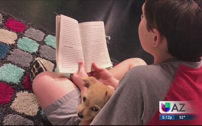 Evento de lectura y ayuda a los animales