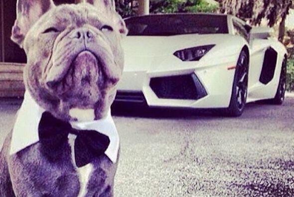 Parece ser que este perro tiene más porte que cualquiera y nos presume e...