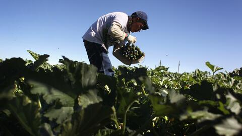 An immigrant worker in Colorado.