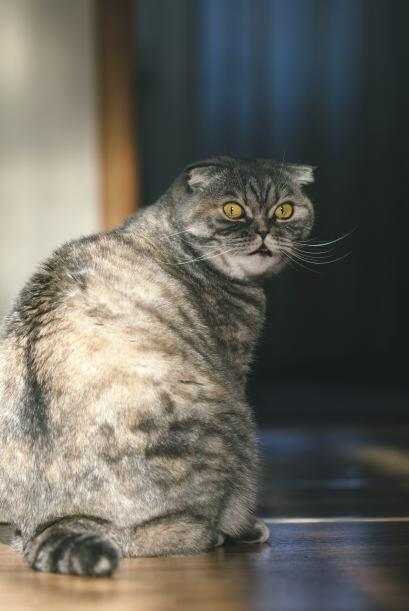 Cola enroscada. Cuando la cola está envuelta alrededor de tu gato quiere...