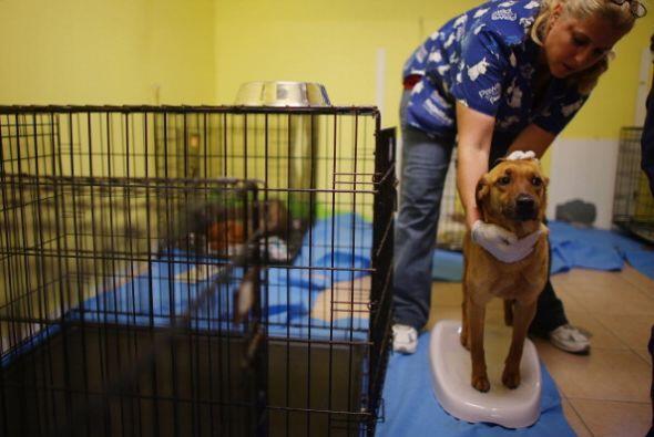 Los refugios a diferencia de las tiendas en las que venden perros te ent...