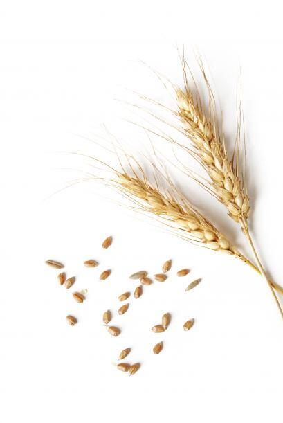 Trigo: Se cree que la vitamina E presente en este alimento, contribuye a...