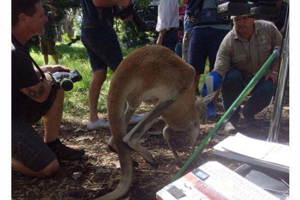 Quedó impactada con la diversidad de la fauna. Mira aquí los videos más...