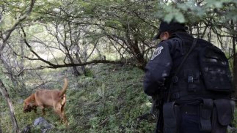 La fiscalía subió de 30 a 38 la cifra de cadáveres hallados en fosas cla...