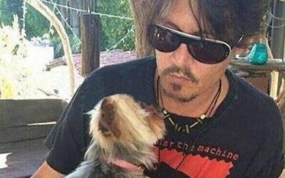 Aparentemente el actor llevó consigo a los cachorros en su jet privado.