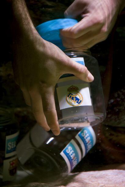 Cada uno de los contenedores tenía en su interior una sardina, ad...