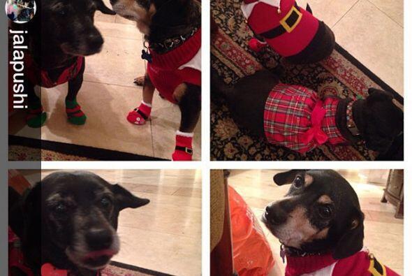 Además publicó los regalitos que le llevó a sus adorados perritos.