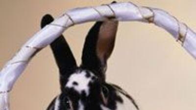 El triste destino del conejo de Pascua 879d5707c1aa4bebbbe606554130b8c9.jpg