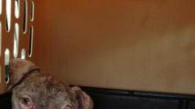 Encuentran perros maltratados en Harvey