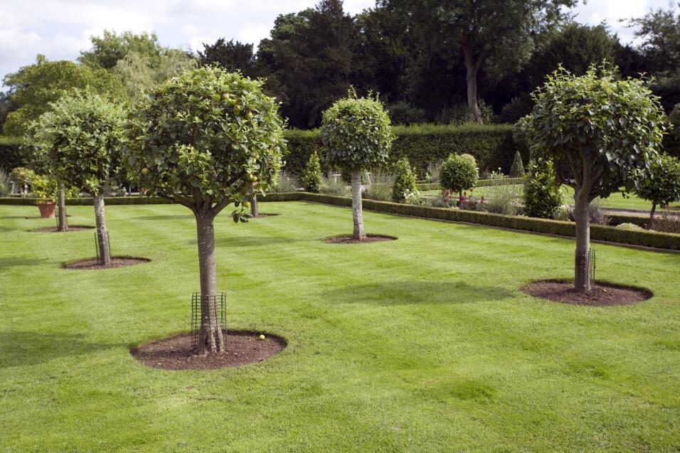 Rboles frutales para tu jard n univision for Arboles para jardin