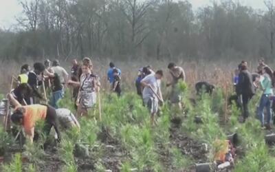 Jornada de reforestación en Houston por el Día del Árbol