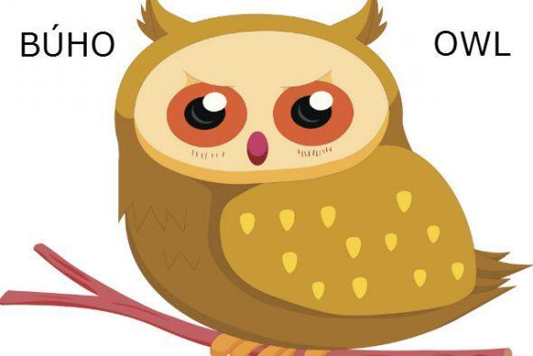 BÚHO - OWL