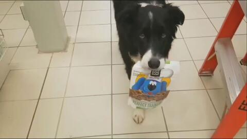 El perro que escoge su comida en el supermercado, lo pone en la cesta, p...
