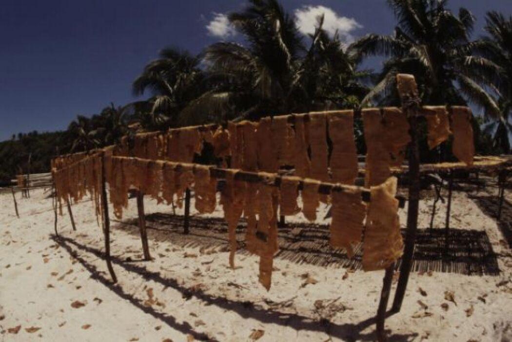 En el Océano Indo Pacífico, la carne y las aletas de tiburón ballena se...