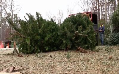 Un programa en el condado de Wake le da una segunda vida a los árboles d...