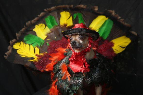 Un pavo puede ser la opción para lucir muy originales y divertido...